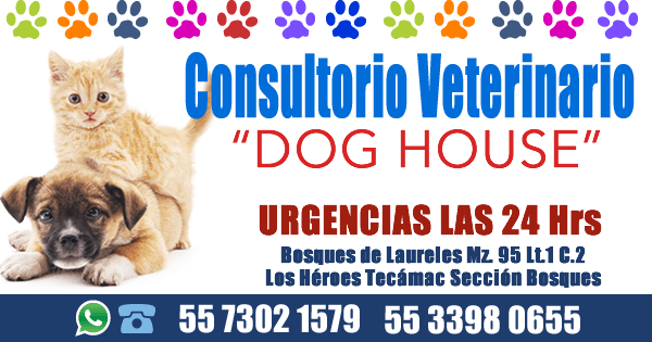 Consultorio Veterinario Dog House